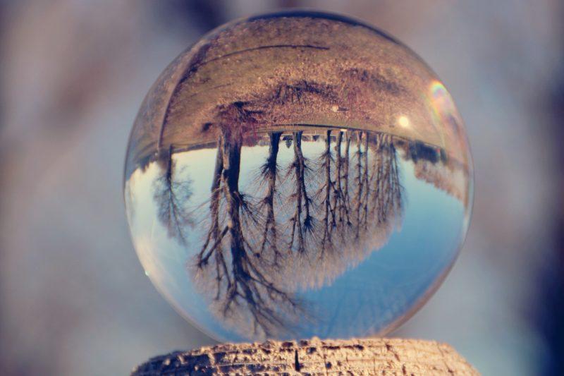 ガラス玉の中で逆さまに映った木の画像